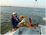 Relaxed Sailing